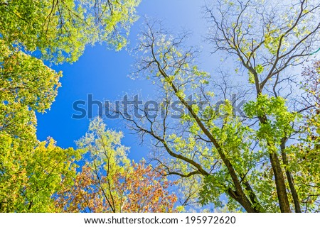 Colorful autumn treetops in autumn forest with blue sky and sun shining though trees. - stock photo
