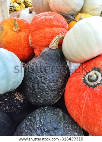 Colorful autumn vegetables at the autumn market. Variety of squashes. - stock photo