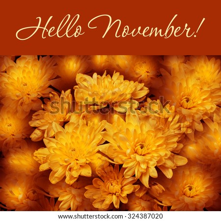 "Colorful autumn wallpaper, background. Floral chrysanthemums fantasy, double exposure artistic effect, soft blur style. ""Hello November!"" greeting card - stock photo"