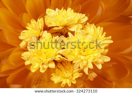Colorful autumn wallpaper, background, greeting card. Floral chrysanthemums fantasy, double exposure artistic effect, soft blur style.  - stock photo