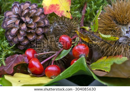 Colorful autumnal background with leaves and fruits