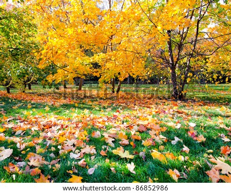 colorful autumnal forest