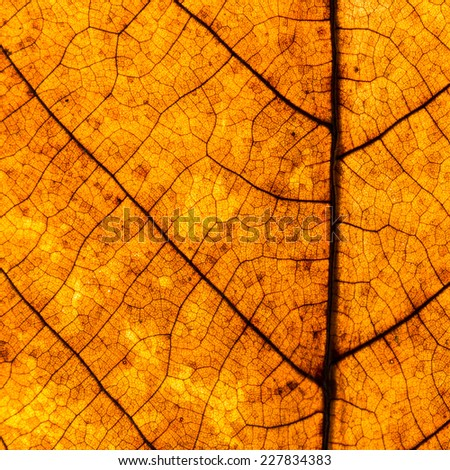 Colorful background of autumn leaf, vintage look