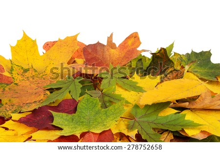 Colorful background of autumn leaves isolated - stock photo