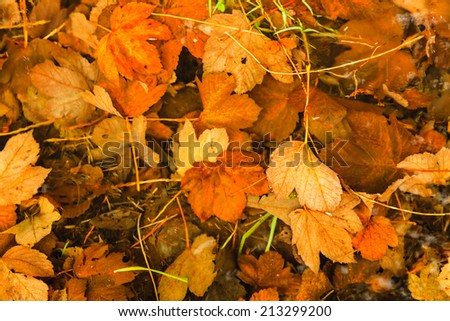 Colorful background of fallen autumn leaves. Orange brown wet autumnal foliage as backdrop wallpaper. Outdoor.