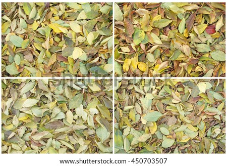 Colorful backround image of fallen autumn leaves perfect for seasonal use