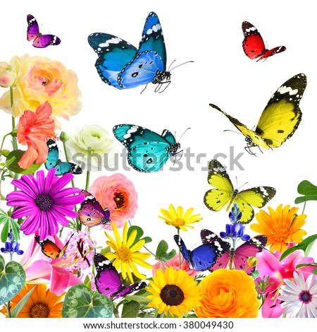 Colorful beautiful flowers and butterflies. Nature abstract background. Isolated on white  - stock photo