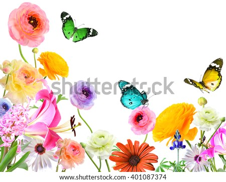 Colorful beautiful flowers and butterflies .Nature abstract background. Isolated on white
