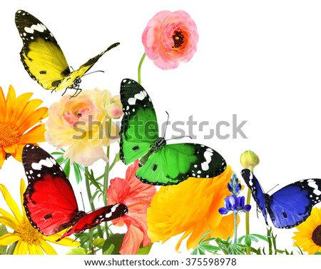 Colorful beautiful flowers and butterflies. Nature abstract background with copy space. Isolated on white  - stock photo