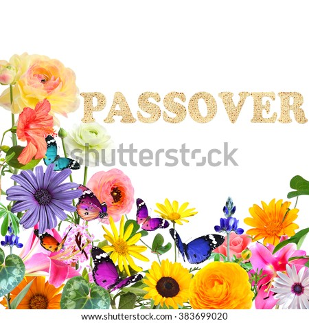 Colorful beautiful flowers,butterflies and word Passover made of Matzoh (matzah or matzo) traditional Jewish dry bread for Passover holiday.Spring nature abstract holiday background.Isolated on white