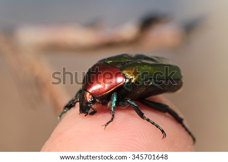 Colorful horned beetle - photo#24