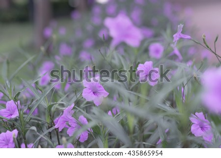 colorful blue flowers. purple flowers.  soft focus, blur flower. flower background - stock photo