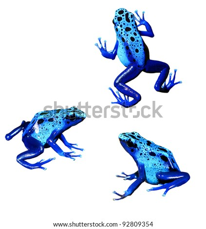 colorful blue frog Dendrobates tinctorius isolated - stock photo
