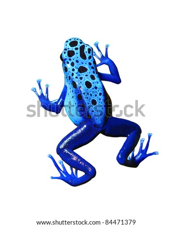 colorful blue frog on white background. Isolated - stock photo