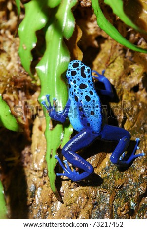 colorful blue frog sitting in terrarium - stock photo