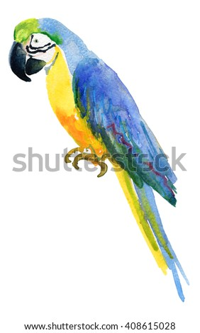 Colorful blue parrot macaw isolated on white background. Watercolor painting.