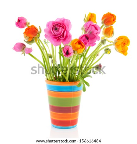Colorful bouquet buttercups in vase isolated over white background