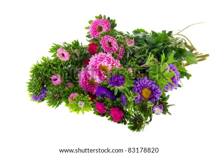 Colorful bouquet New England Asters isolated over white background