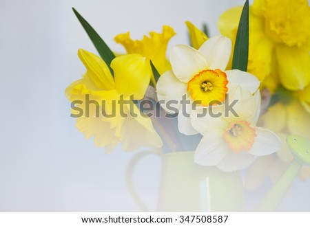 Colorful bouquet of fresh flowers. Bouquet narcissus. Bouquet of daffodils. Soft focus
