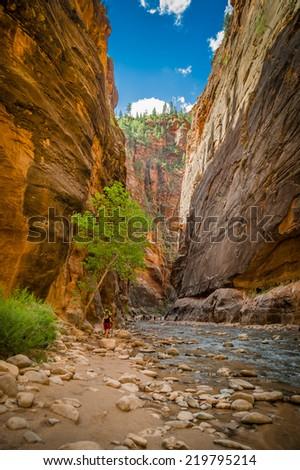colorful breathtaking virgin river narrows in zion national park utah - stock photo