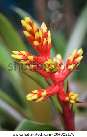 colorful bromeliad flower. - stock photo