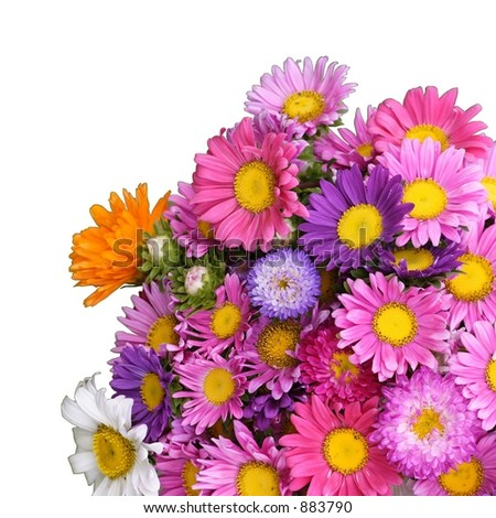 Colorful bunch of summer flowers - stock photo