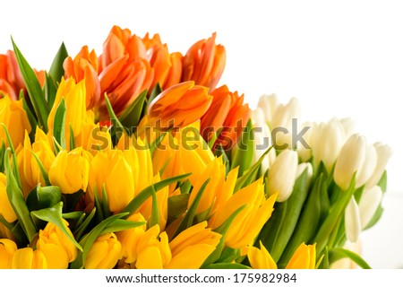 Colorful bunch of tulips spring flowers isolated on white - stock photo