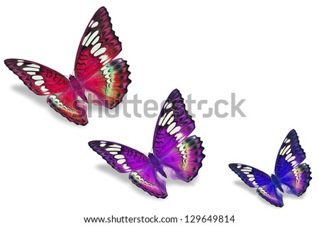 Colorful butterflies - stock photo