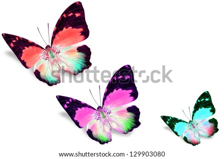 Colorful Butterflies Stock Photo 129903080 - Shutterstock
