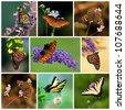 Colorful butterfly collage representing seasons spring, summer, and autumn - stock photo