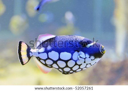 colorful butterfly-fish in a aquarium - stock photo
