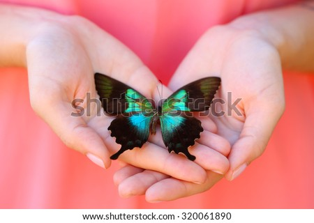 Colorful butterfly in female hand, close-up - stock photo