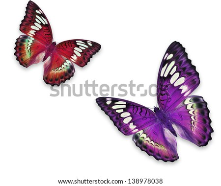 Colorful butterfly in flying positions in bright red and purple. Isolated on white, studio shot. - stock photo
