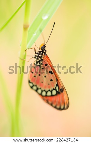Colorful  butterfly in green grass field - stock photo
