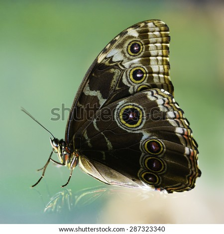 Colorful butterfly isolated on a green background - stock photo