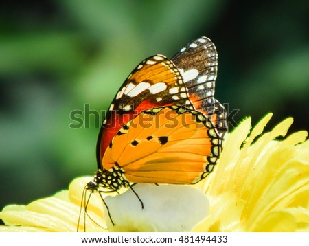 colorful butterfly macro