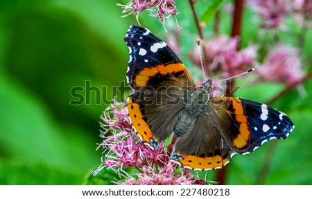 Colorful butterfly on a flower with bright green background - stock photo