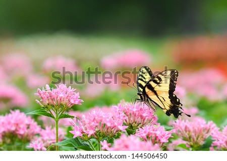 Colorful butterfly on pink flowers  - stock photo