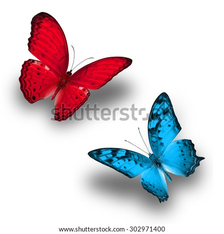 Colorful Butterfly Red Butterfly Light Blue Stock Photo (Royalty ...