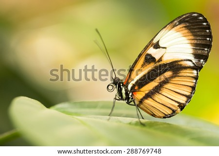 Colorful butterfly resting on a leaf. - stock photo