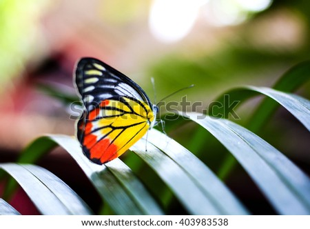 Colorful butterfly resting on the palm tree leaf in Thailand.  - stock photo