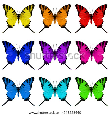 Colorful butterfly upper wing profile set isolated on white background - stock photo