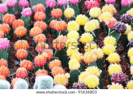 colorful cactus background.