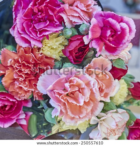 colorful carnation flowers bouquet closeup - stock photo