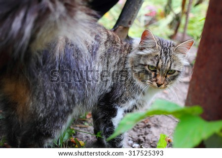 colorful cat with green eyes and white whiskers on a background of ground and grass