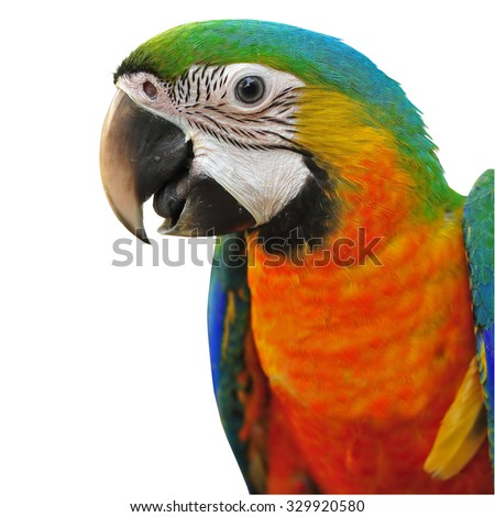Colorful Catalina Macaw Isolated - stock photo