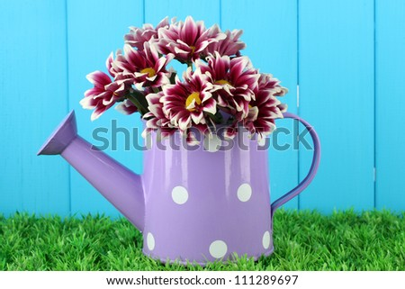 colorful chrysanthemums in violet watering can with white polka dot on blue fence background