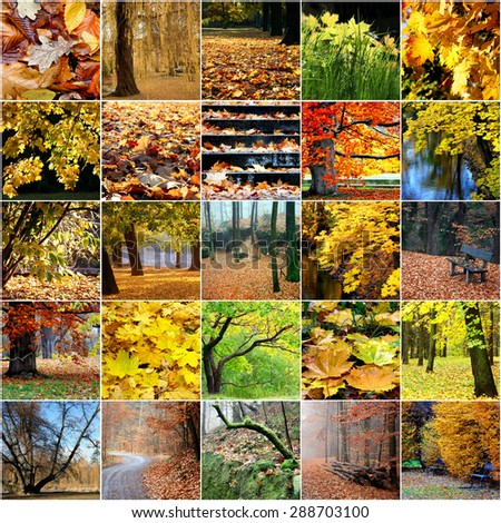 Colorful collage of autumn trees Leaves