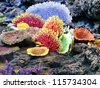 Colorful Coral - stock photo