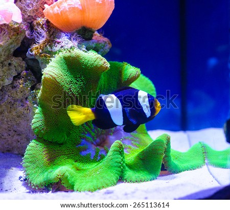 colorful coral and fish in the tropical sea - stock photo
